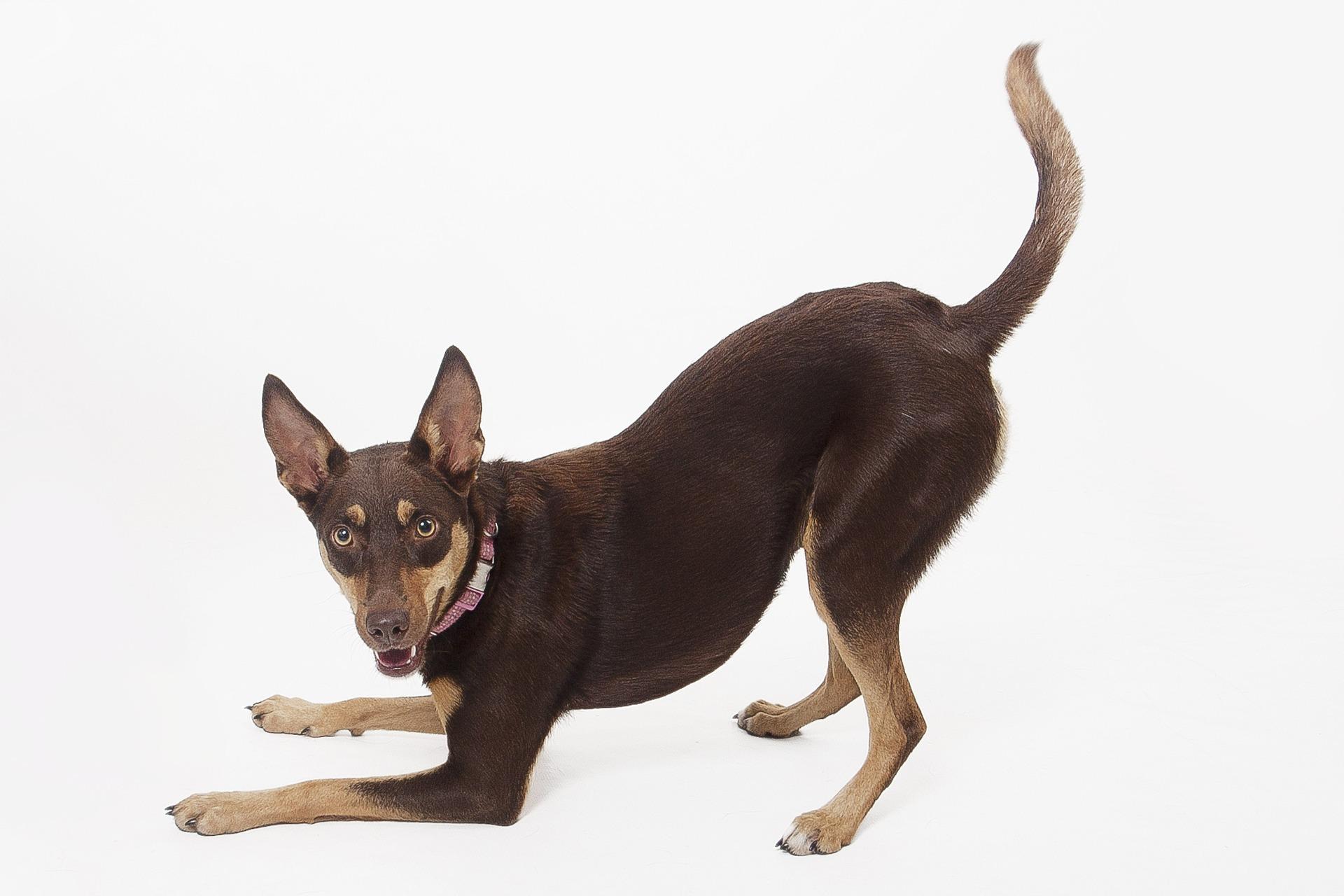 Cómo enseñar a tu perro a ir al baño
