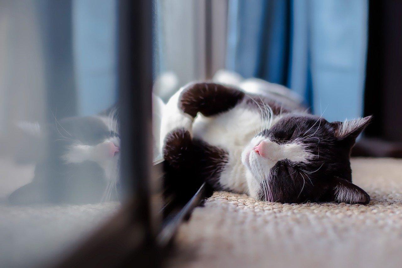 Golpes de calor en mascotas