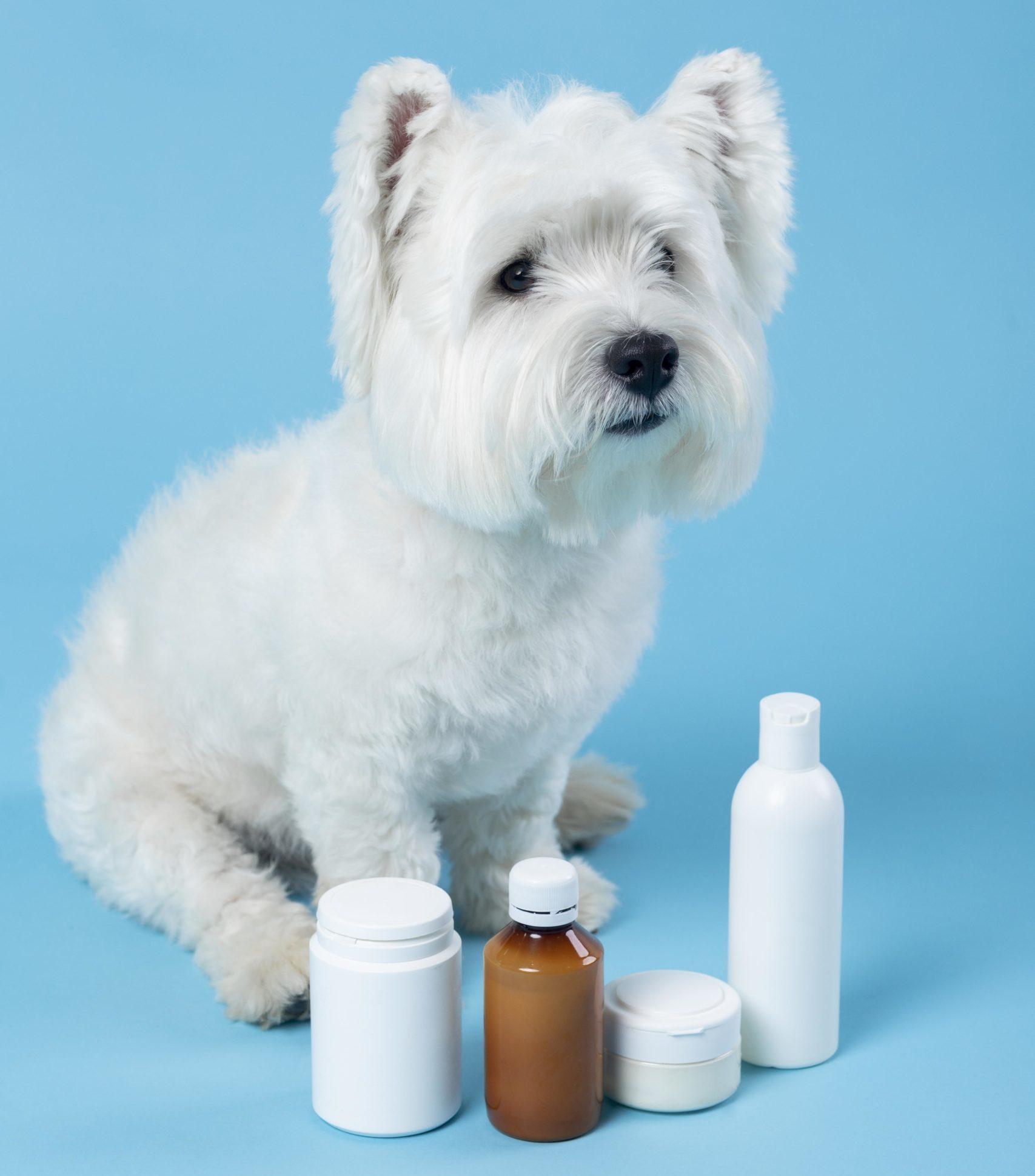 Leishmaniosis en perros: síntomas, prevención y tratamiento