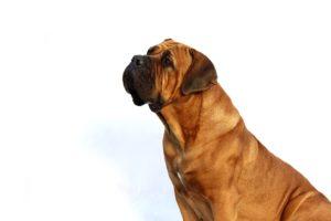 ¿Qué edad humana tiene tu perro?