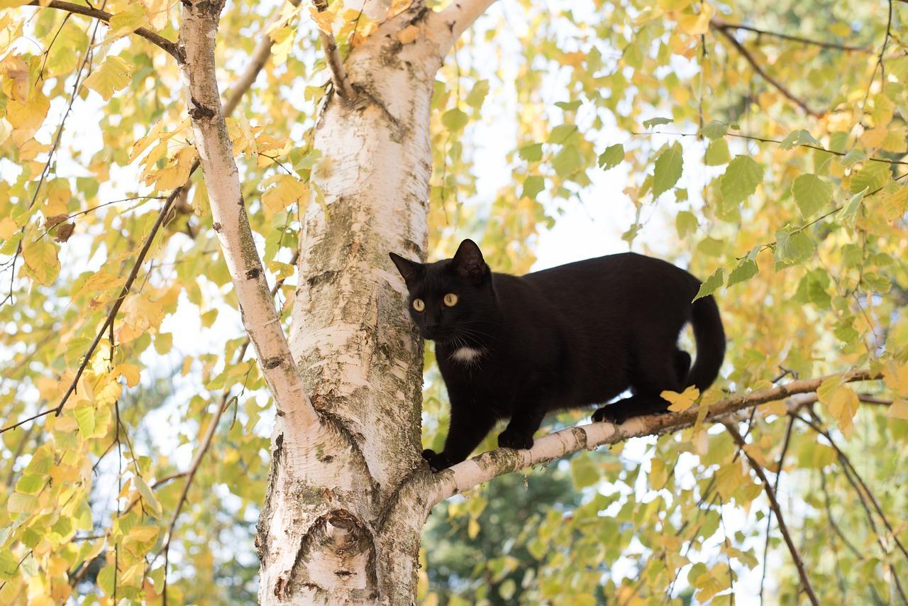 ¿Por qué a los gatos les gustan los lugares altos?